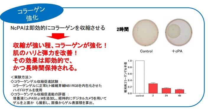 NcPAが即効的にコラーゲンを収縮させる説明