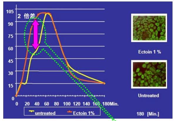エクトインのヒートショックプロテインの生成の数値を表したグラフ