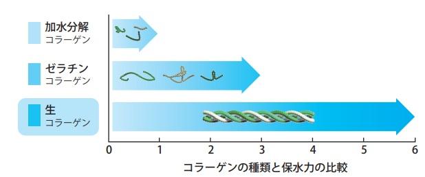コラーゲンの種類と保水力の比較のグラフ