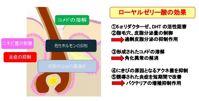 ルミラストに含まれるローヤルゼリー酸の効果の説明
